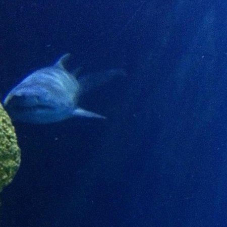 Tennessee Aquarium: Ocean Journey