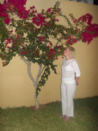 Bungalows Miraflor Suites : Нюхаю цветочки:)