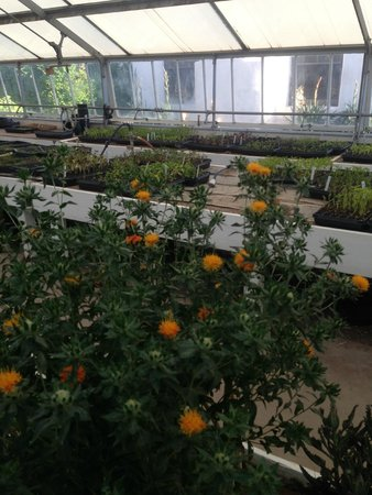 Los Poblanos Historic Inn & Organic Farm: Greenhouse