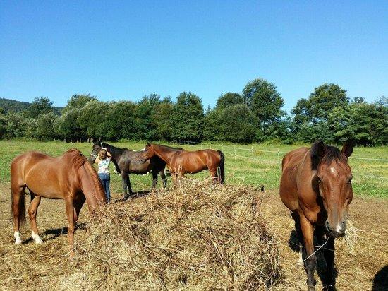 Madarian: Sacando a los caballos