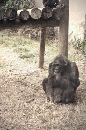 Safari Park: задумался