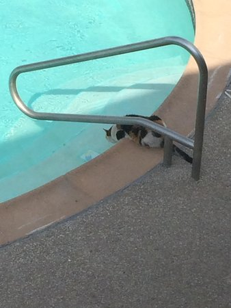 Shenandoah Inn: They have 2 very friendly and adorable house cats that patrol the pool area.