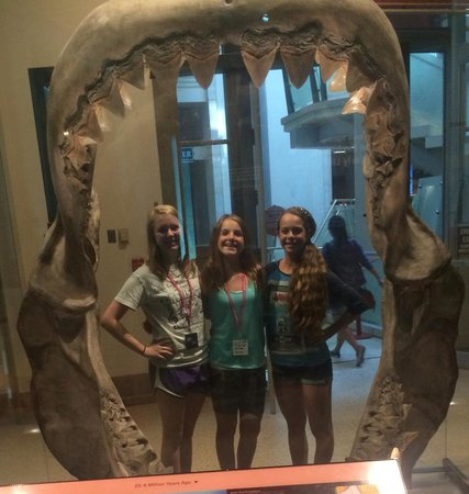 National Museum of Natural History : Shark Teeth