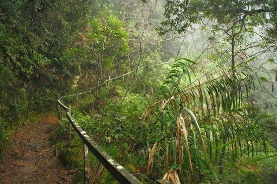 Mount Kinabalu: Climb up