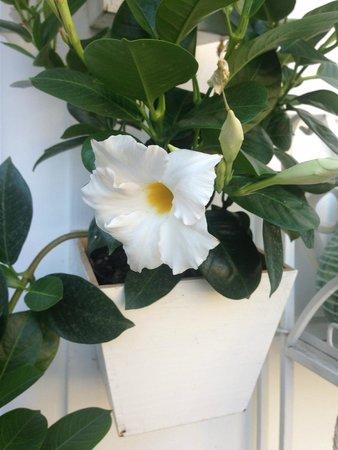 Casa e Bottega: beautiful flowers outside