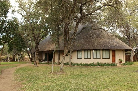 Wildlife Encounters- nDzuti Safari Camp : nDzuti Safari Camp
