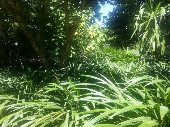 Les Jardins Exotiques de Bouknadel : Verde