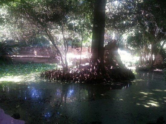 Les Jardins Exotiques de Bouknadel : Laghetto