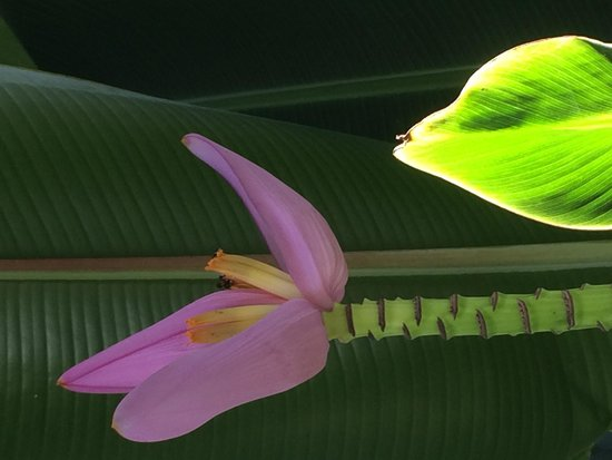 Hotel Bocas del Mar: Flower in the garden