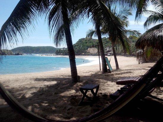 Punta Placer Bungalows: Palmeras, sol y playa