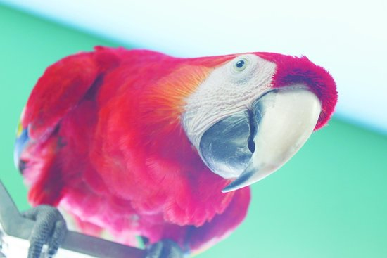 Black Hills Parrot Welfare & Education Center: This is just one of many cute faces you will meet at the sanctuary