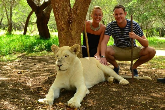 Heritage Awali Golf & Spa Resort: Walk with lions