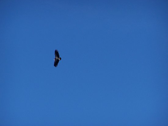 Angel's Landing : Condors at the top