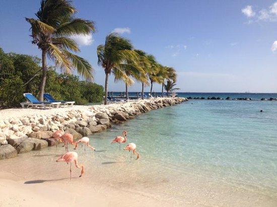 Renaissance Aruba Resort & Casino: Aruba private island