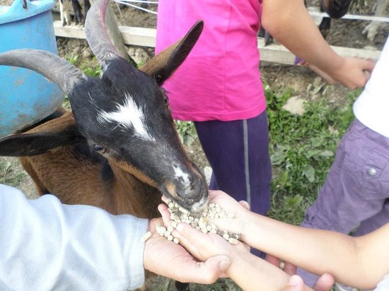 Hauteluce, France: La Ferme Du Cugnon - Chèvre