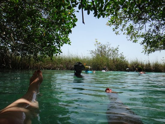 Cesiak Centro Ecologico Sian Ka'an : Floating in the mangroves..