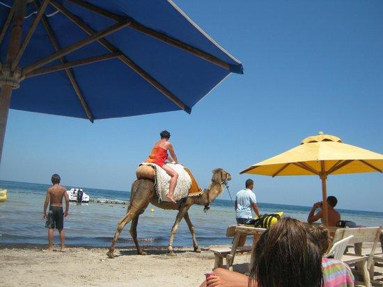 Delphin Ribat: private beach for watersports
