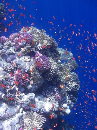 Ras Mohamed National Park: underwater