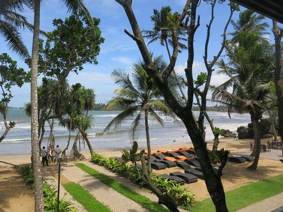 CoCo Bay Unawatuna: Palmen