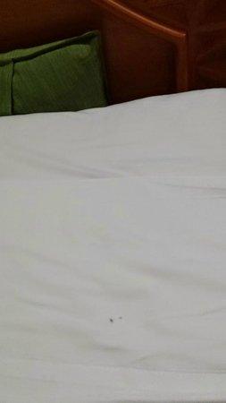 Malibu Hotel: Hormigas en las camas