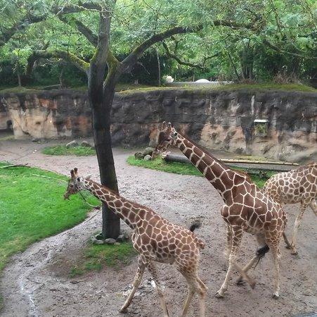 Oregon Zoo: .
