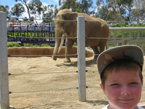 San Diego Zoo : Elephant and Mark..