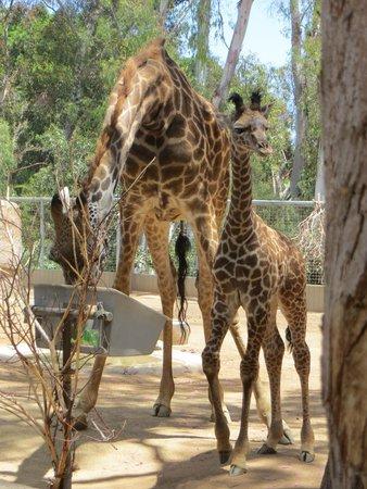 San Diego Zoo : Cute ones..