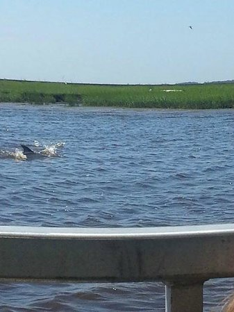 Cap'n Rod's Lowcountry Plantation Tours : Dolphins are we are headed back to dock!!!