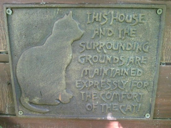 Terra Nova Garden: Feline disclaimer!?