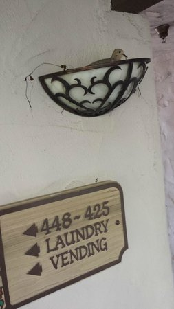 Radisson Suites Hotel Anaheim - Buena Park: Bird nesting in walkway light fixture