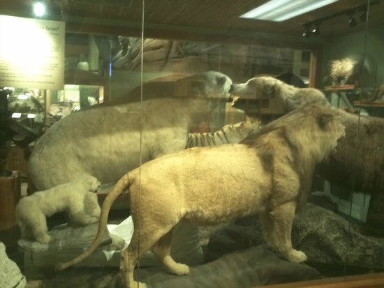 Museum of Science : Mammals on the Nature wing of the museum
