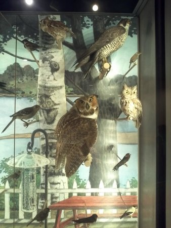 Museum of Science : Some birds on the impressive collection on the Nature wing of the museum