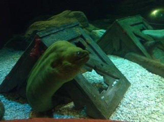 Mystic Aquarium: Scary Eel