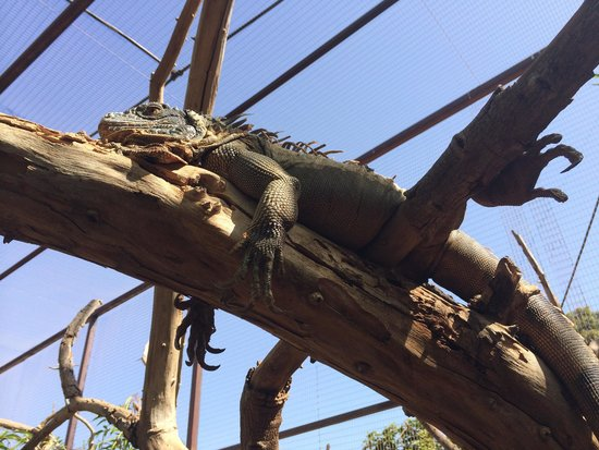 Monkey Park: Зверюга