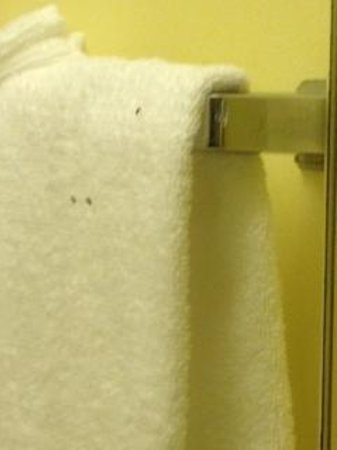 Heritage House Hotel : Bugs on towels