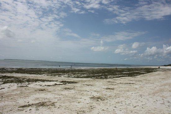 Uroa Bay Beach Resort : Lo del fondo es donde empieza la zona para poder bañarse con marea baja