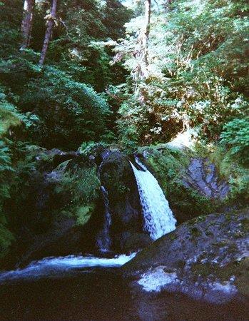 Rainforest Paddlers : Hoh River