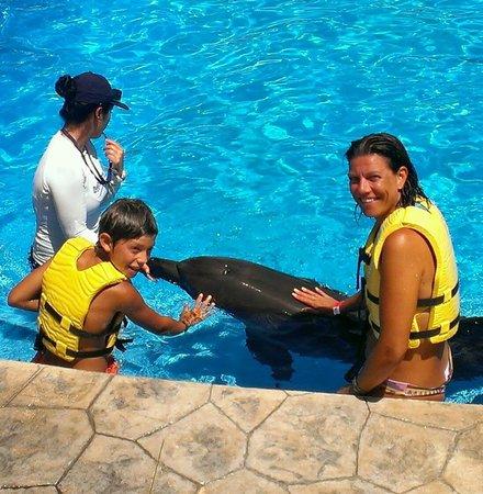 Barceló Maya Beach: Delfinario del Barceló