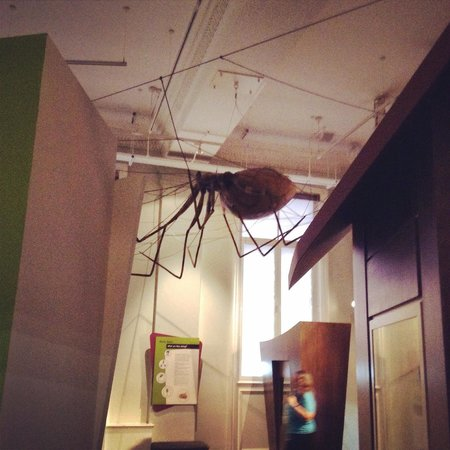 World Museum: A big giant spider
