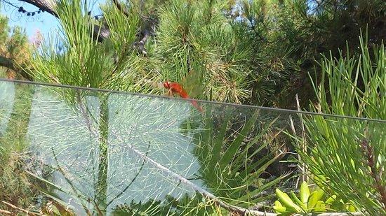 Village Vacances La Balagne: Une libellule ce pose à coté de la piscine