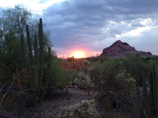 Desert Botanical Garden: wonderful sunsets