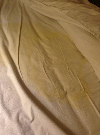 Super 8 New Braunfels TX: Massive urine stain on one of the beds.