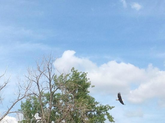 The Forks National Historic Site: Bald Eagle on boat tour
