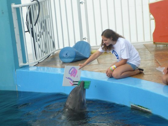 Clearwater Marine Aquarium: Nicholas, the painting dolphin