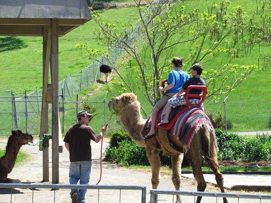 Wildlife Safari: bumpy riders