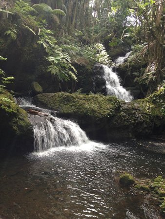 Hawaii Tropical Botanical Garden : Tropical Gardens