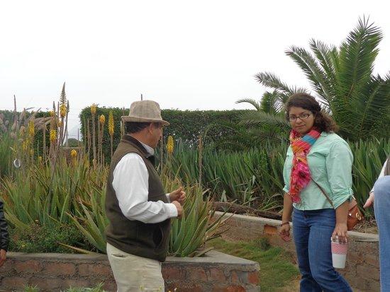 Some of the plants fotograf a de jardin de los sentidos trujillo tripadvisor - El jardin de los sentidos ...