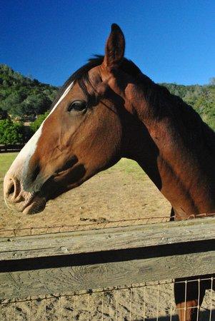 RustRidge B&B / Winery: One of the many beautiful horses
