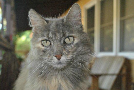 RustRidge B&B / Winery: One of the 5 cats