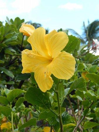 Grand Hyatt Kauai Resort & Spa: Flower